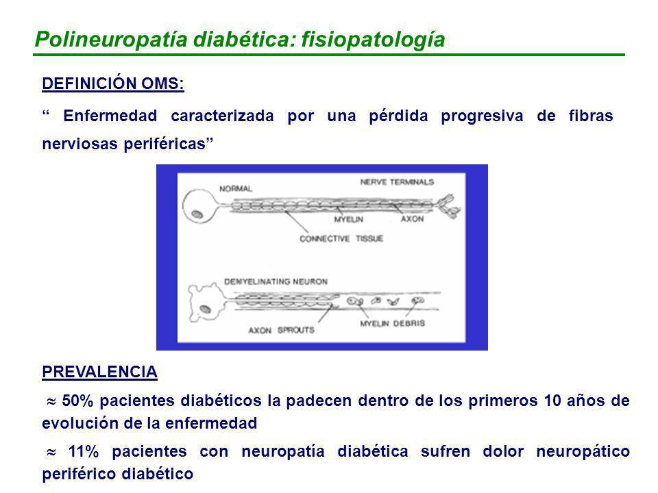 Polineuropatía diabética: fisiopatología