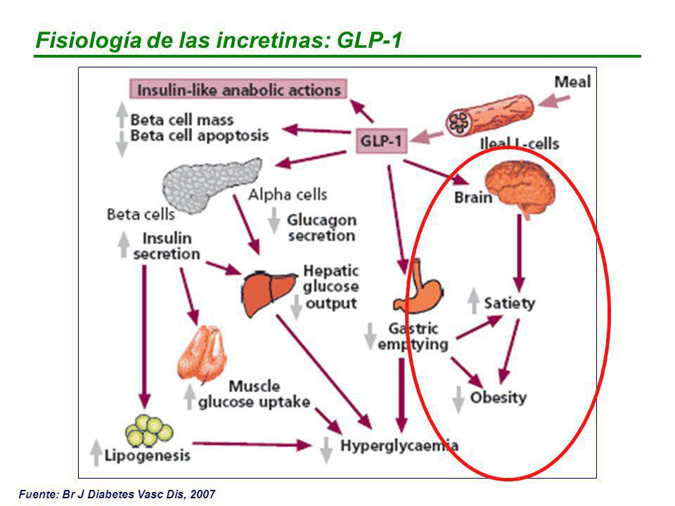 Fisiología de las incretinas: GLP-1