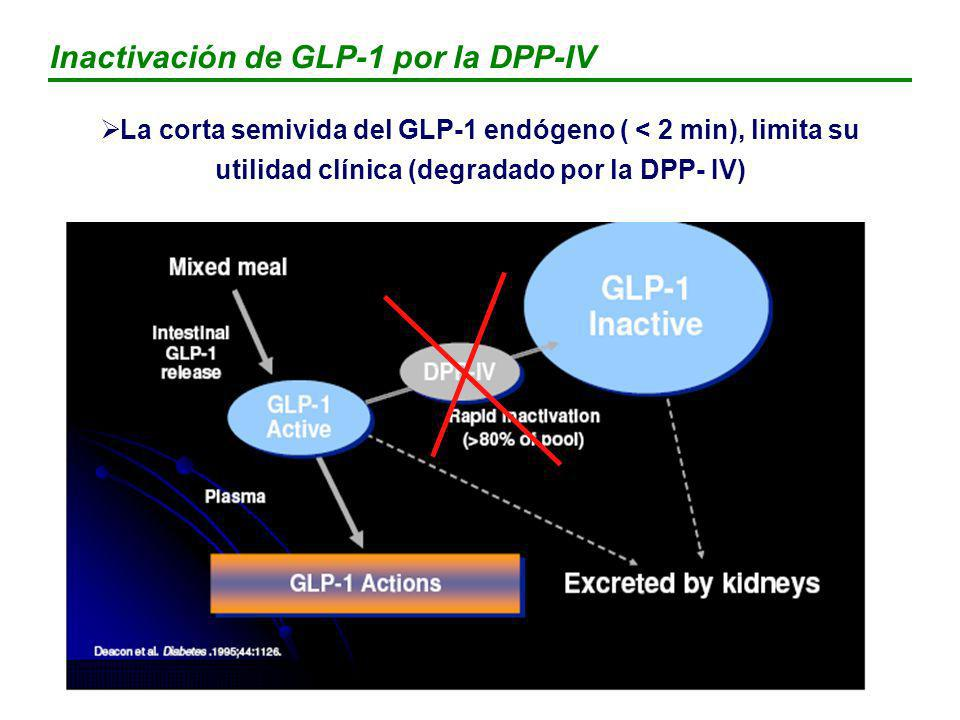 Inactivación de GLP-1 por la DPP-IV