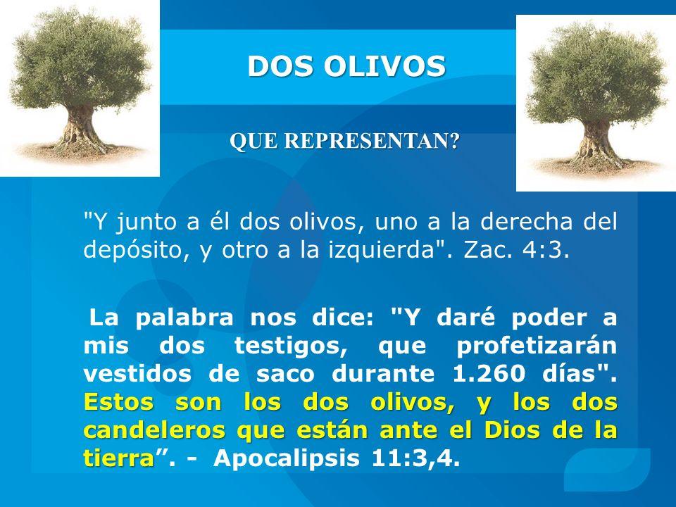 DOS OLIVOS QUE REPRESENTAN