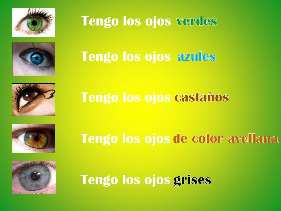 Tengo los ojosverdes. Tengo los ojos. azules. Tengo los ojos. castaños. Tengo los ojos. de color avellana.