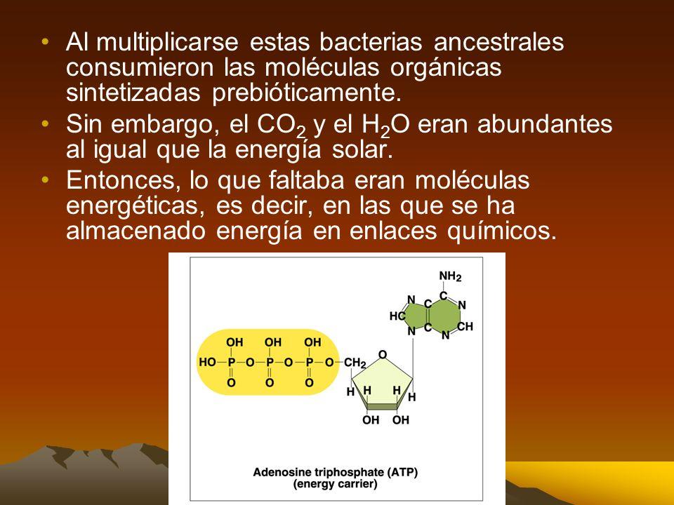 Al multiplicarse estas bacterias ancestrales consumieron las moléculas orgánicas sintetizadas prebióticamente.