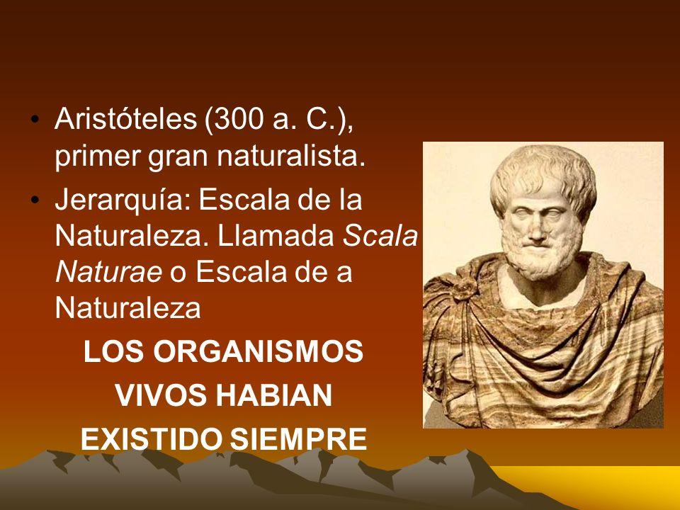 Aristóteles (300 a. C.), primer gran naturalista.