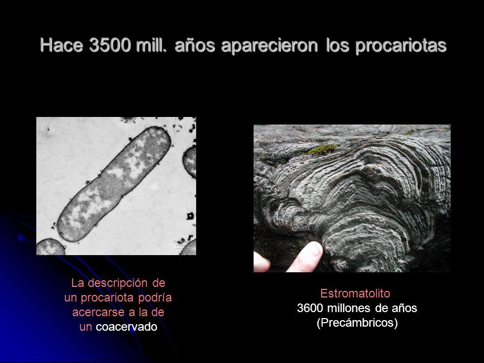 Hace 3500 mill. años aparecieron los procariotas