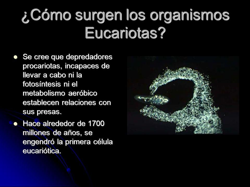 ¿Cómo surgen los organismos Eucariotas