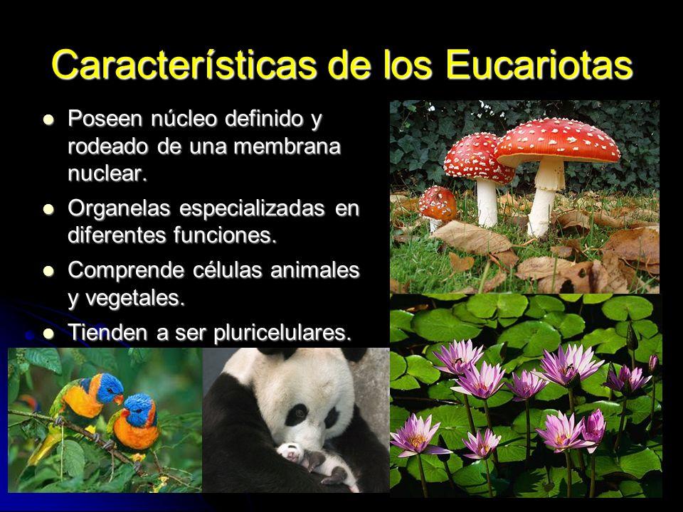Características de los Eucariotas