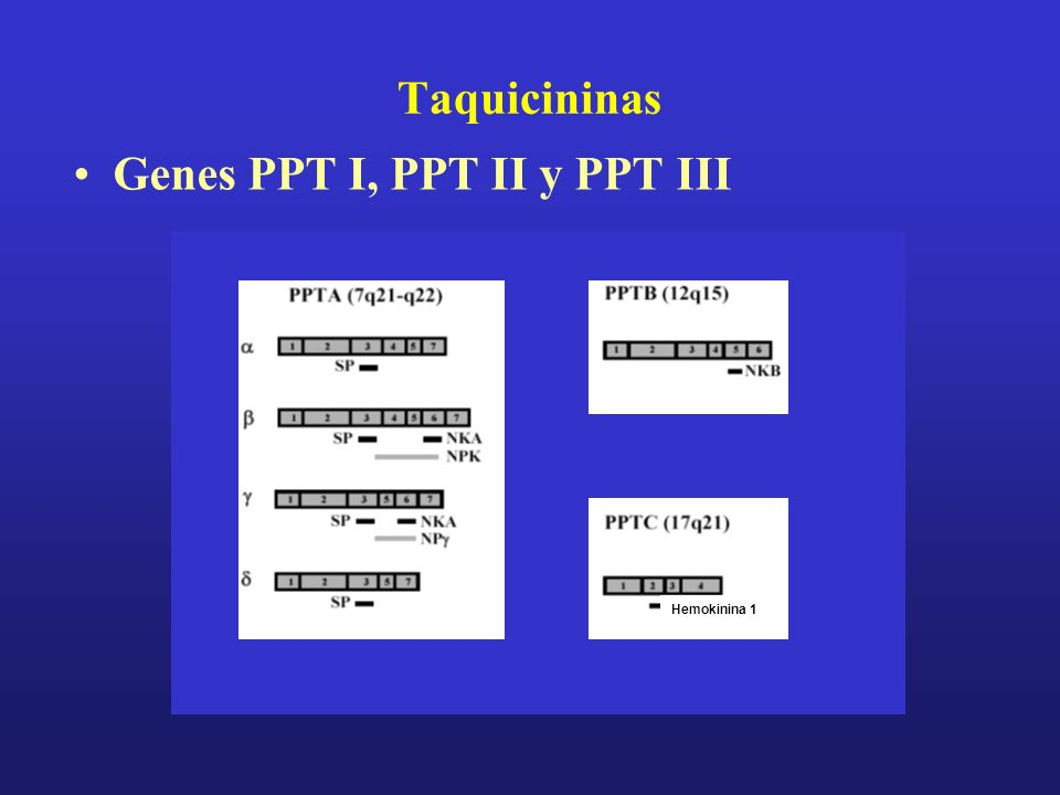Genes PPT I, PPT II y PPT III