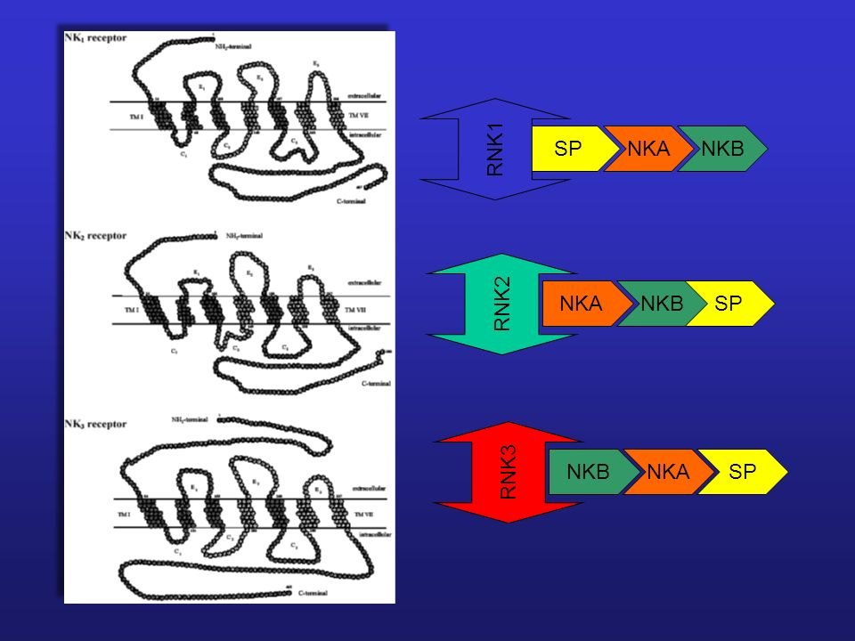 SP NKA NKB RNK1 RNK2 NKA SP NKB NKB NKA RNK3 SP