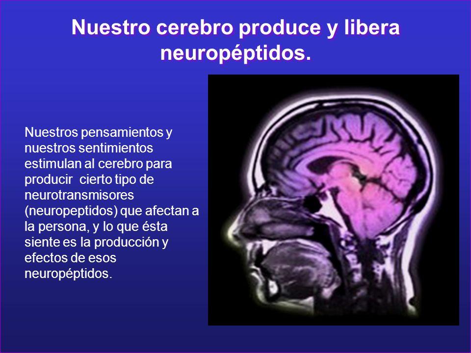 Nuestro cerebro produce y libera neuropéptidos.