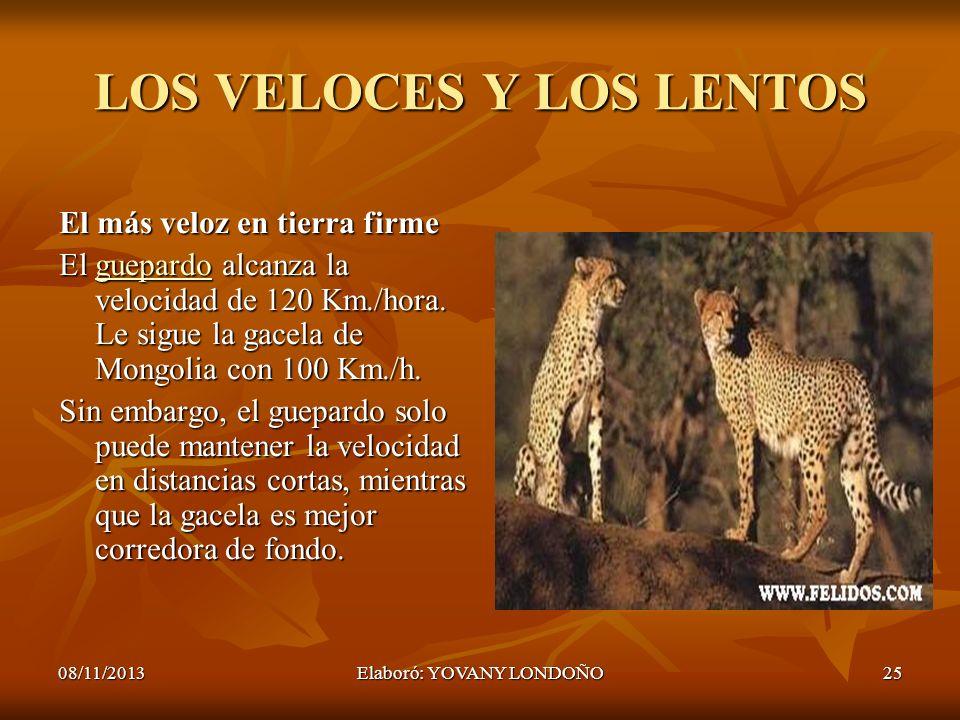 LOS VELOCES Y LOS LENTOS