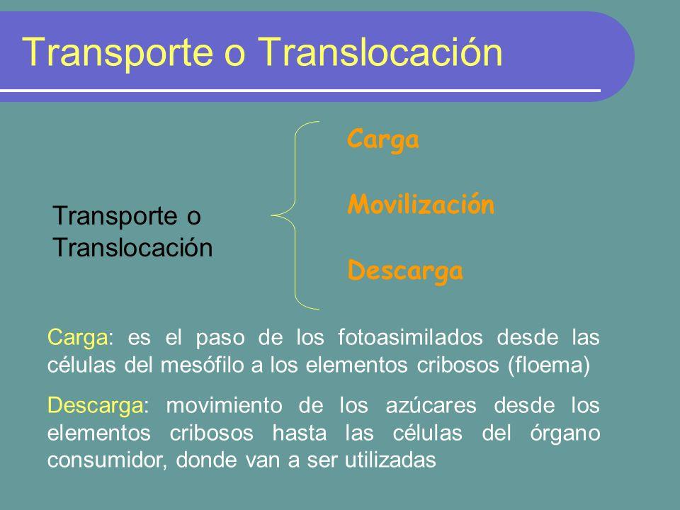 Transporte o Translocación