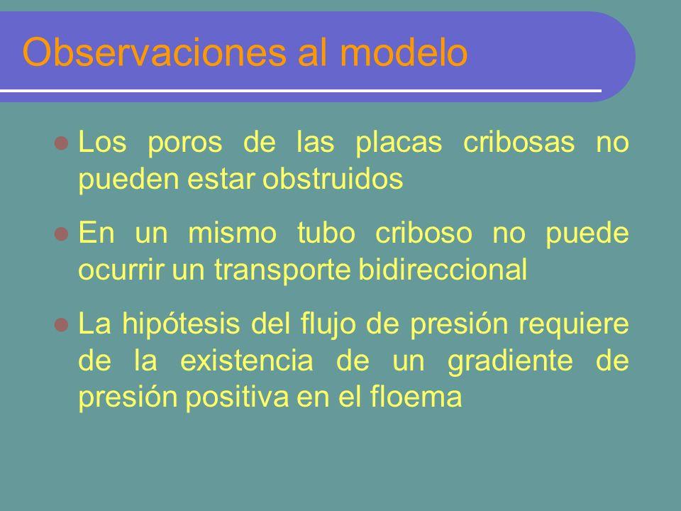 Observaciones al modelo