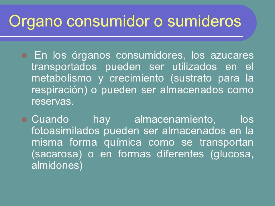 Organo consumidor o sumideros
