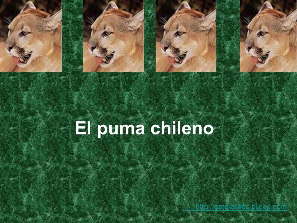 El puma chileno http://estelasaez.bligoo.com