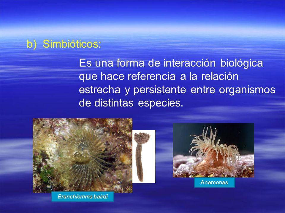 Simbióticos: Es una forma de interacción biológica que hace referencia a la relación estrecha y persistente entre organismos de distintas especies.
