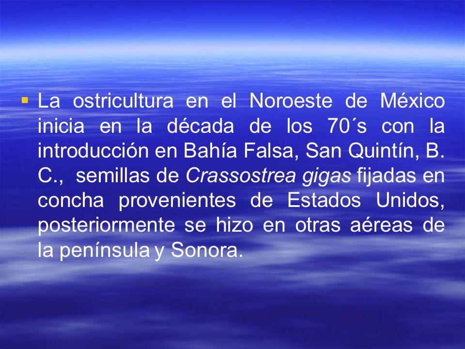 La ostricultura en el Noroeste de México inicia en la década de los 70´s con la introducción en Bahía Falsa, San Quintín, B.