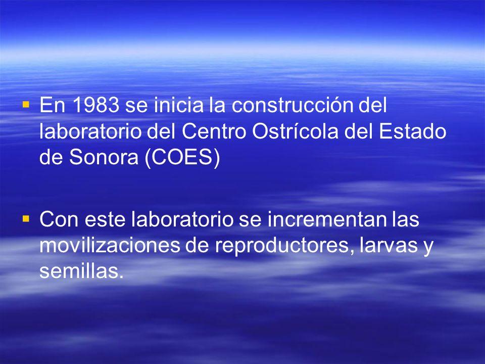 En 1983 se inicia la construcción del laboratorio del Centro Ostrícola del Estado de Sonora (COES)