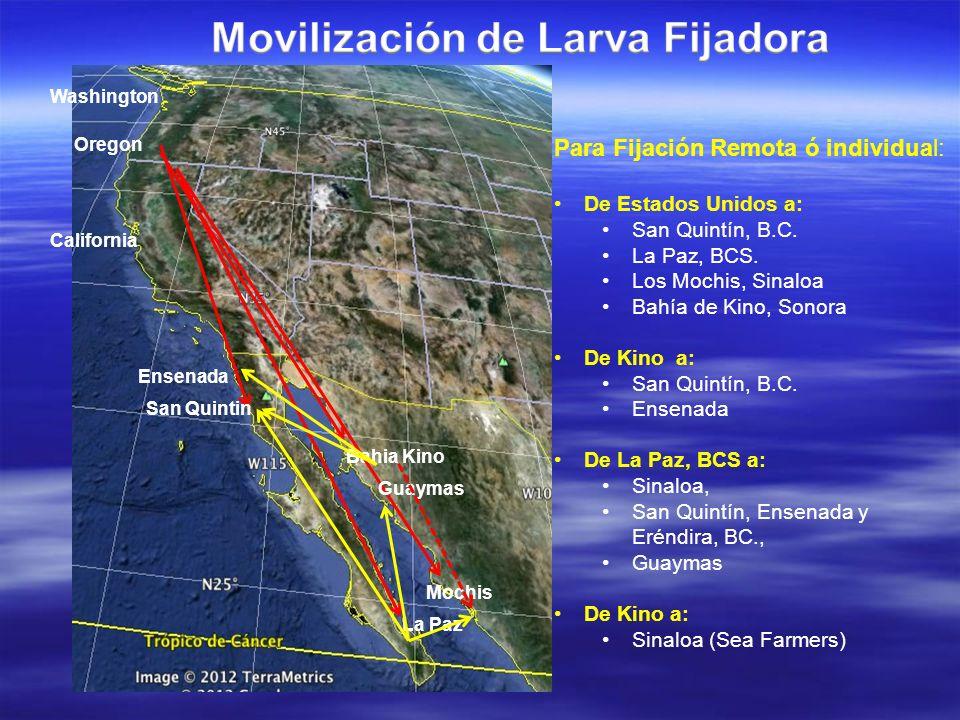 Movilización de Larva Fijadora