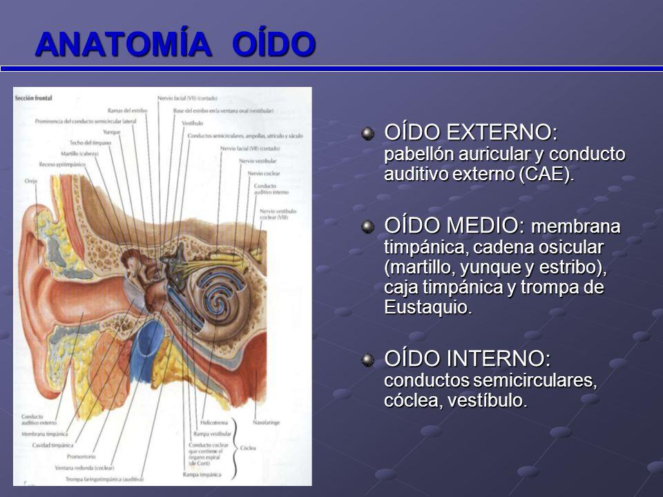 ANATOMÍA OÍDOOÍDO EXTERNO: pabellón auricular y conducto auditivo externo (CAE).