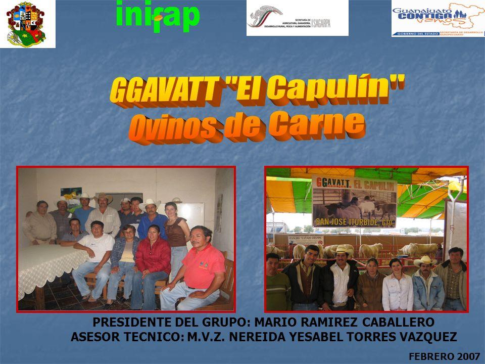 GGAVATT El Capulín Ovinos de Carne