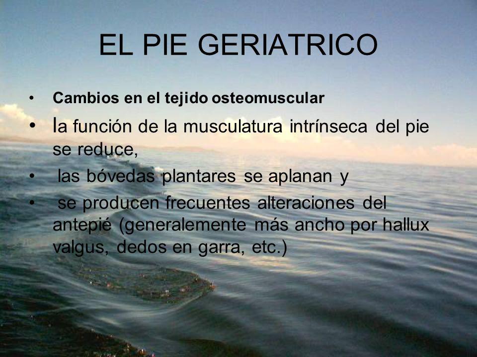 EL PIE GERIATRICO Cambios en el tejido osteomuscular. la función de la musculatura intrínseca del pie se reduce,