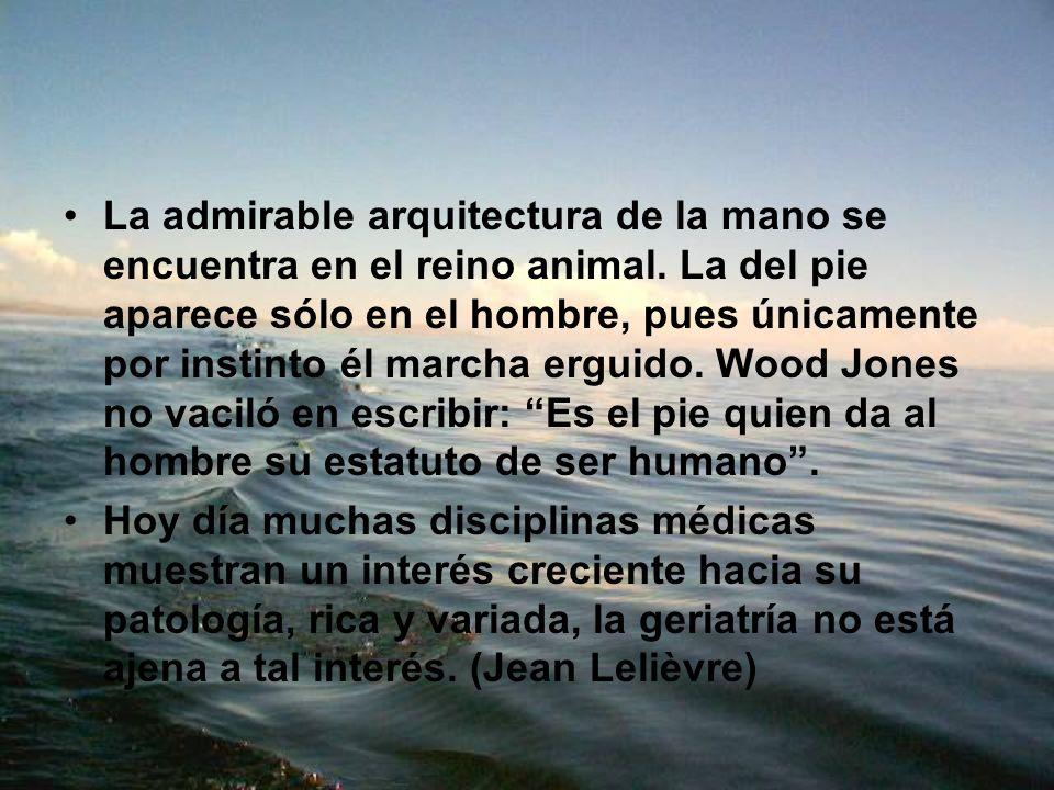 La admirable arquitectura de la mano se encuentra en el reino animal