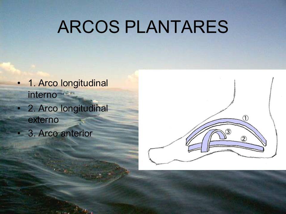 ARCOS PLANTARES 1. Arco longitudinal interno