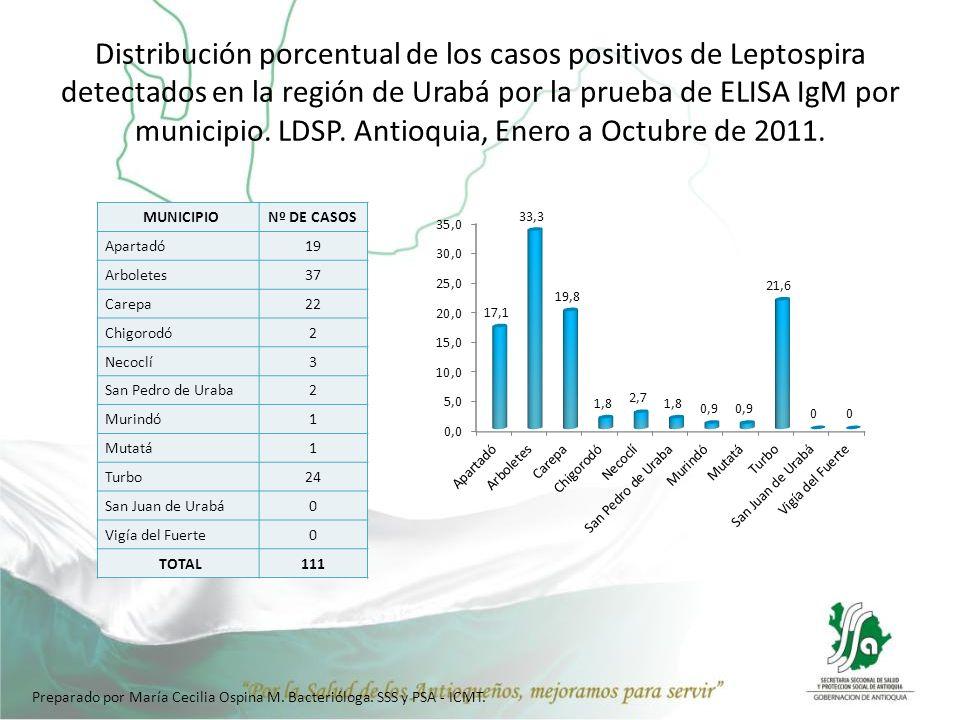Distribución porcentual de los casos positivos de Leptospira detectados en la región de Urabá por la prueba de ELISA IgM por municipio. LDSP. Antioquia, Enero a Octubre de 2011.