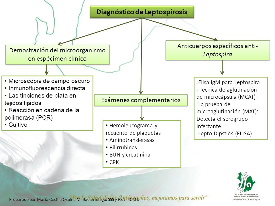 Diagnóstico de Leptospirosis