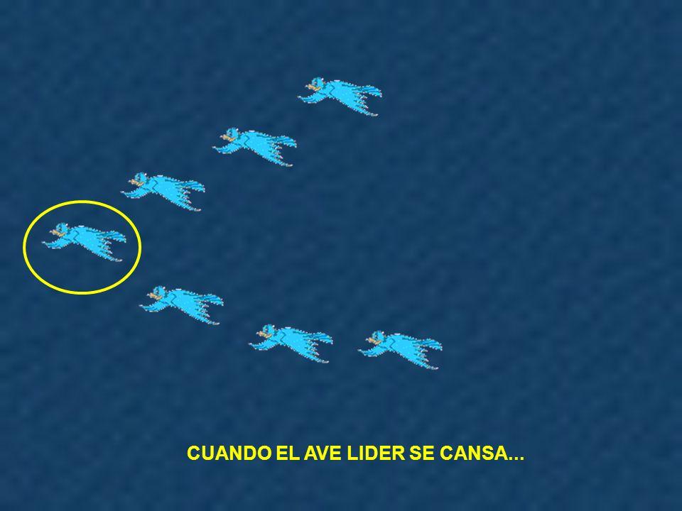CUANDO EL AVE LIDER SE CANSA...