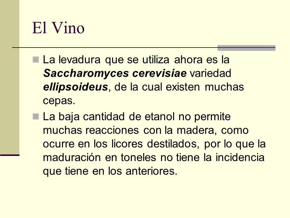 El VinoLa levadura que se utiliza ahora es la Saccharomyces cerevisiae variedad ellipsoideus, de la cual existen muchas cepas.