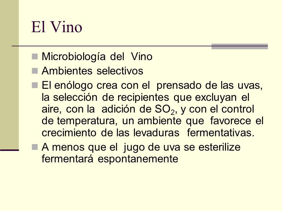 El Vino Microbiología del Vino Ambientes selectivos