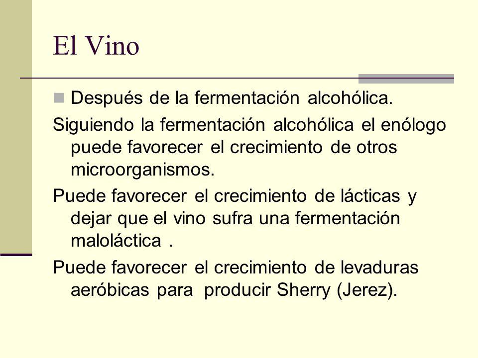 El Vino Después de la fermentación alcohólica.