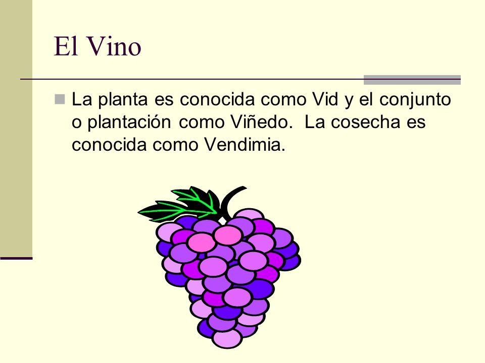 El Vino La planta es conocida como Vid y el conjunto o plantación como Viñedo.