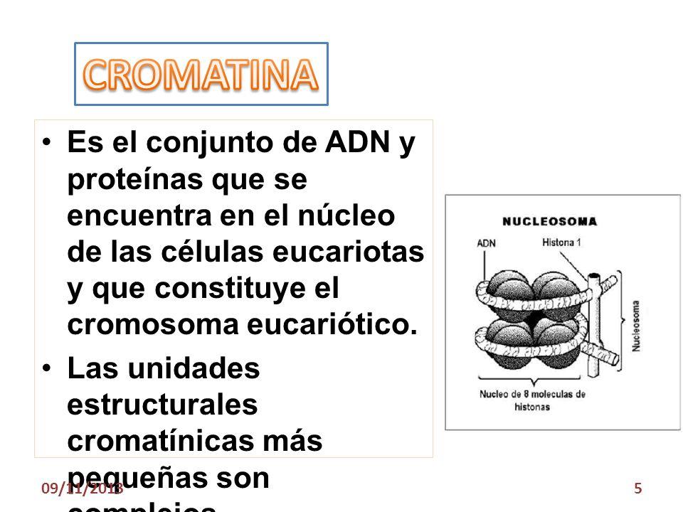 CROMATINA Es el conjunto de ADN y proteínas que se encuentra en el núcleo de las células eucariotas y que constituye el cromosoma eucariótico.