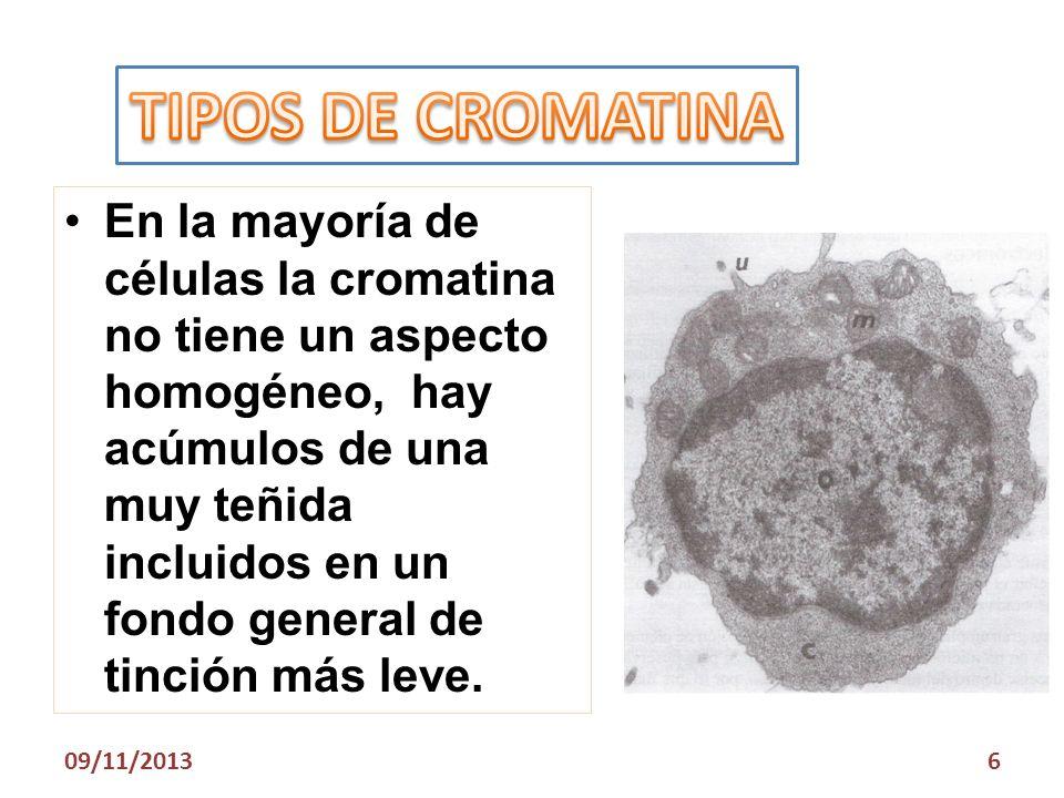 TIPOS DE CROMATINA