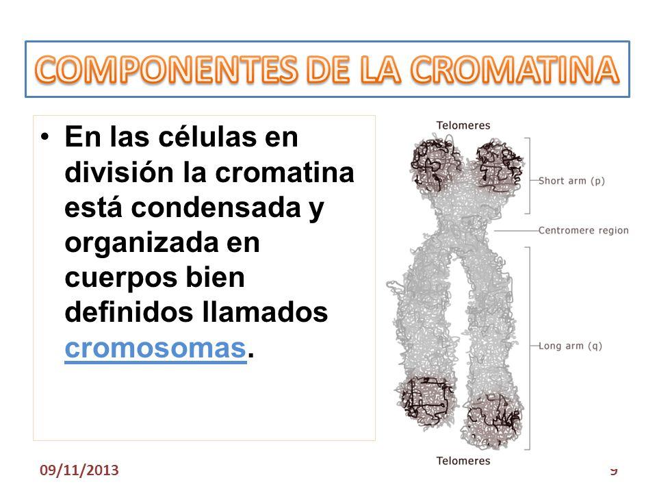COMPONENTES DE LA CROMATINA
