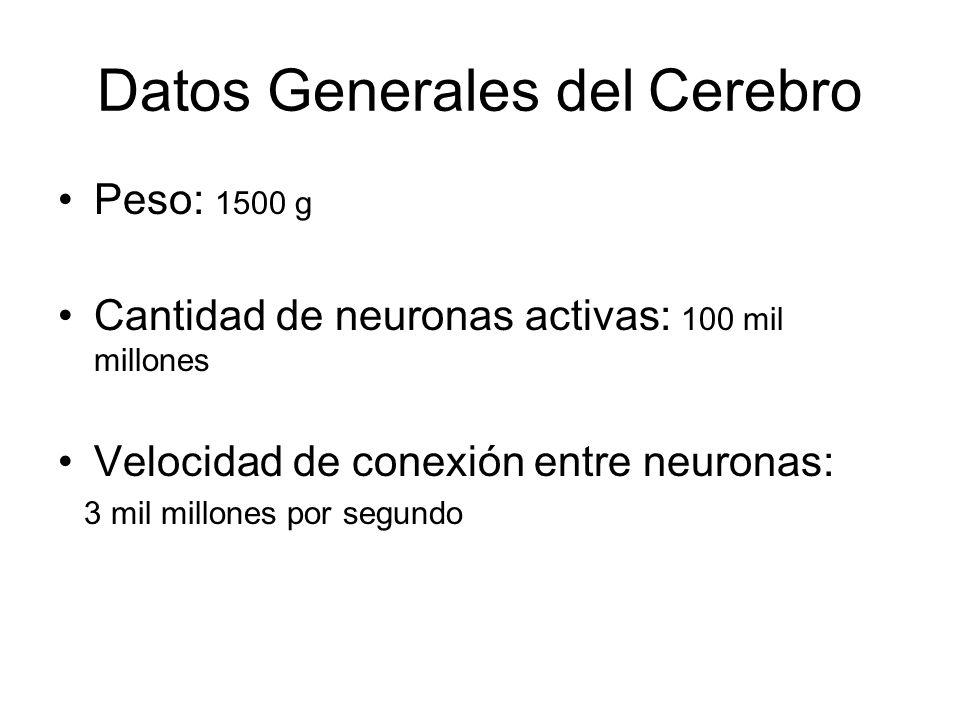 Datos Generales del Cerebro