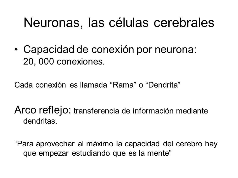 Neuronas, las células cerebrales