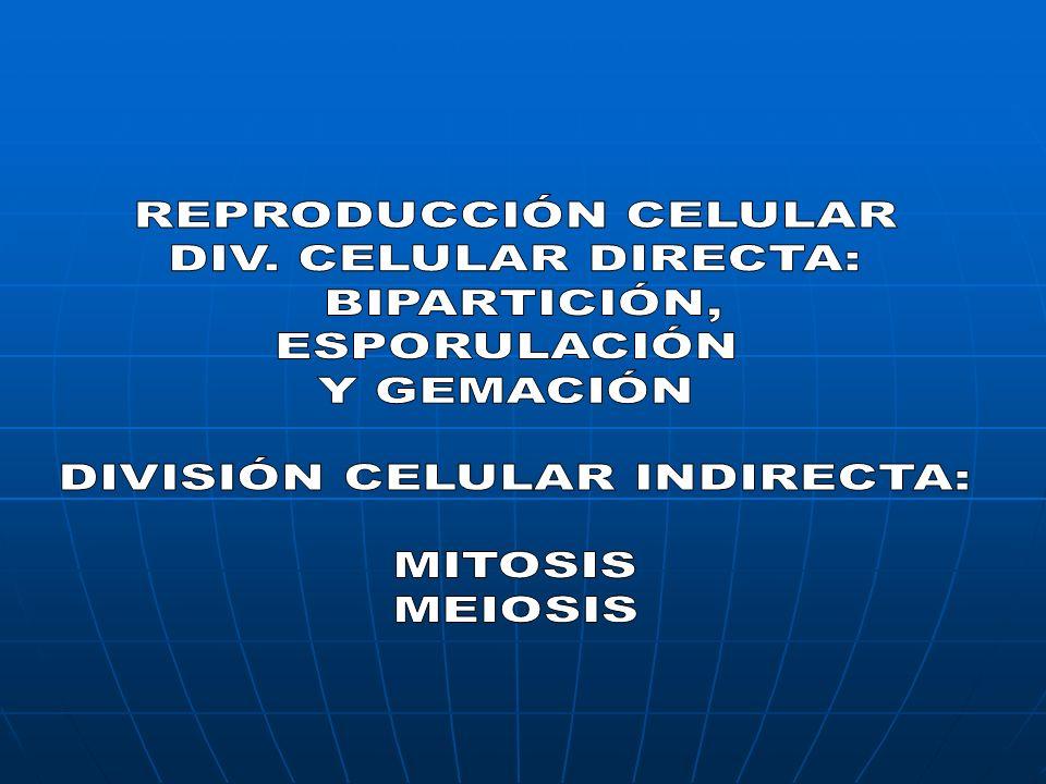 DIVISIÓN CELULAR INDIRECTA: