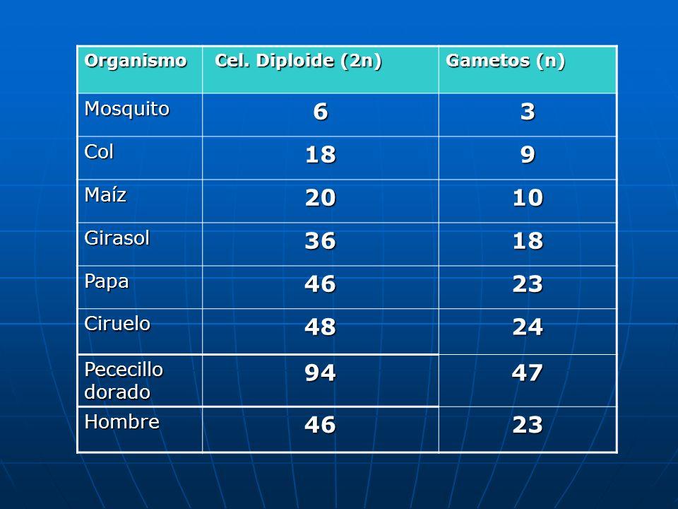6 3 18 9 20 10 36 46 23 48 24 94 47 Mosquito Col Maíz Girasol Papa