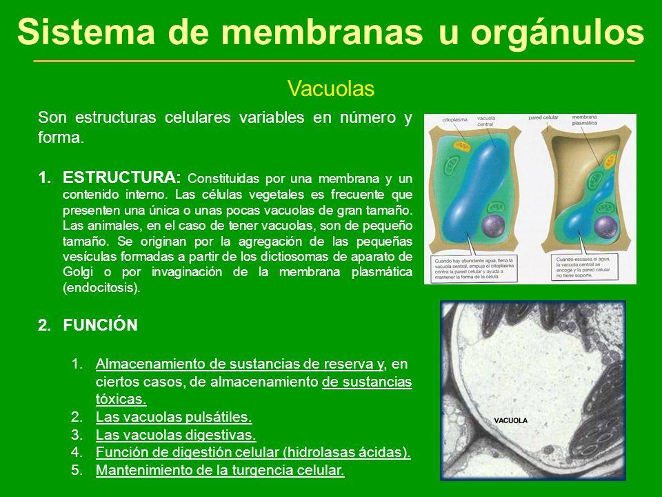 Sistema de membranas u orgánulos
