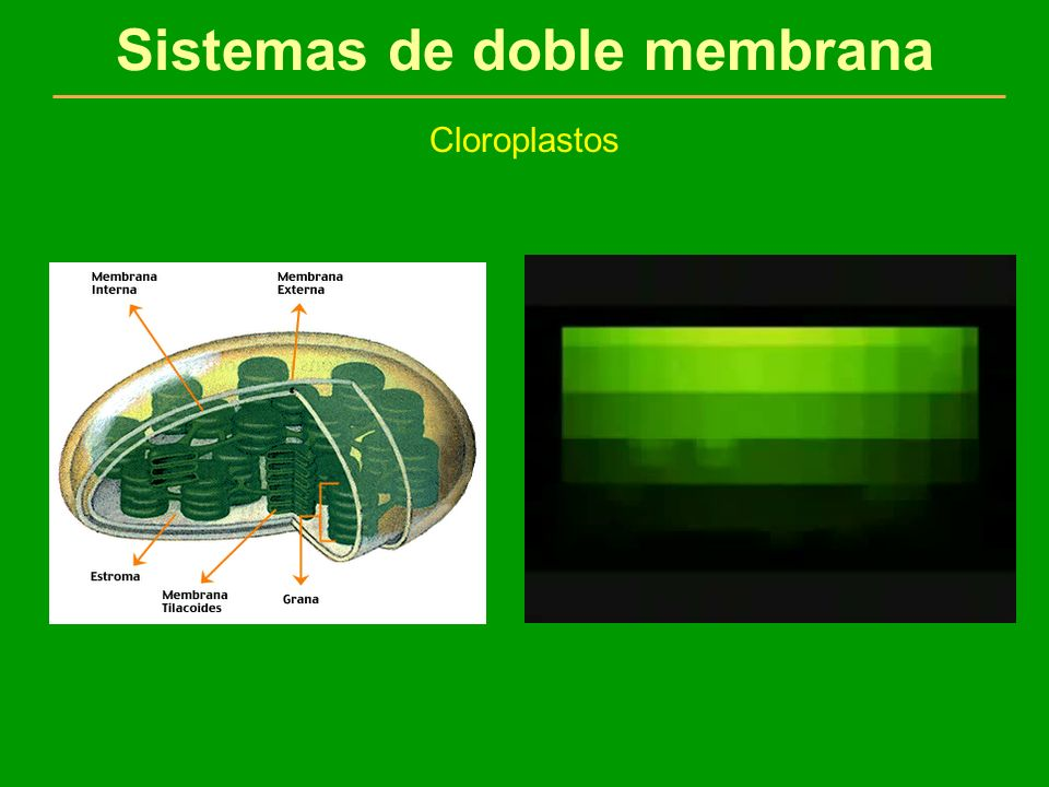 Sistemas de doble membrana