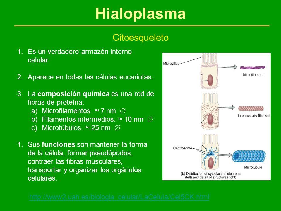 Hialoplasma Citoesqueleto Es un verdadero armazón interno celular.