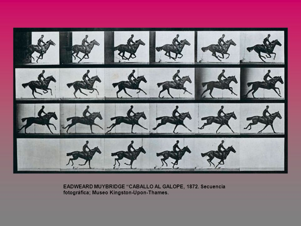 EADWEARD MUYBRIDGE CABALLO AL GALOPE, 1872