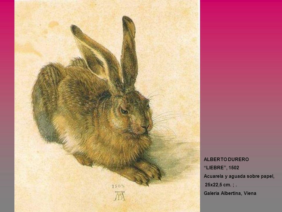 ALBERTO DURERO LIEBRE , 1502. Acuarela y aguada sobre papel, 25x22,5 cm.