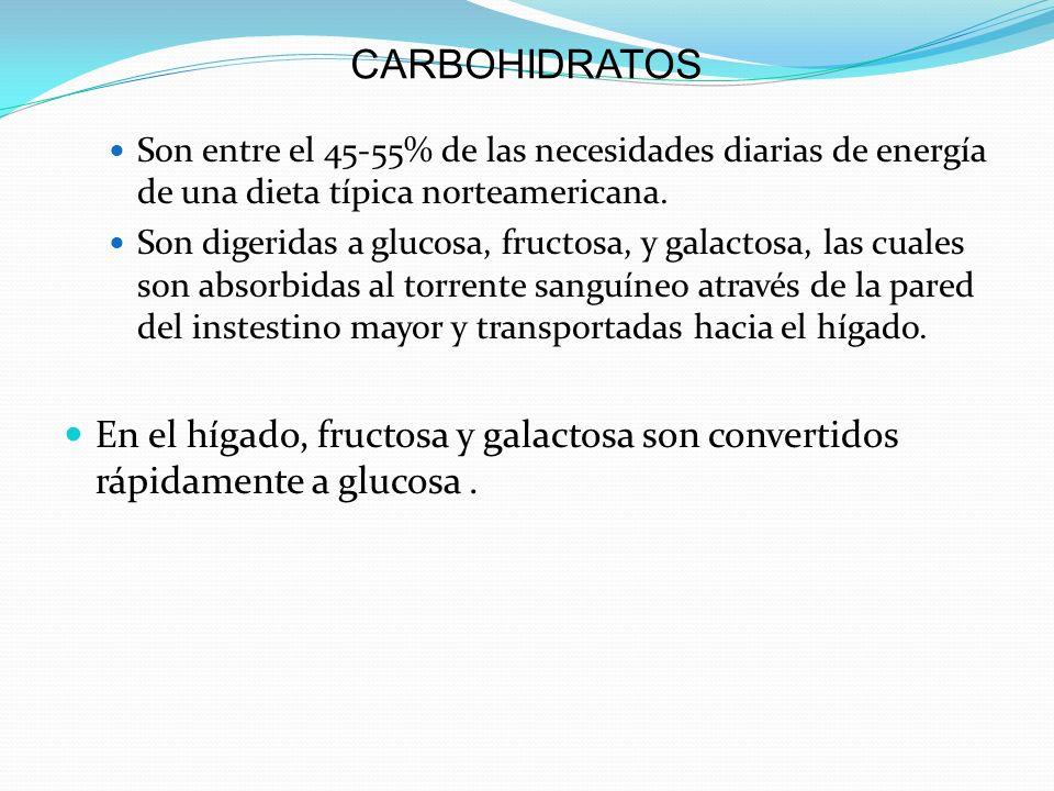 CARBOHIDRATOS Son entre el 45-55% de las necesidades diarias de energía de una dieta típica norteamericana.