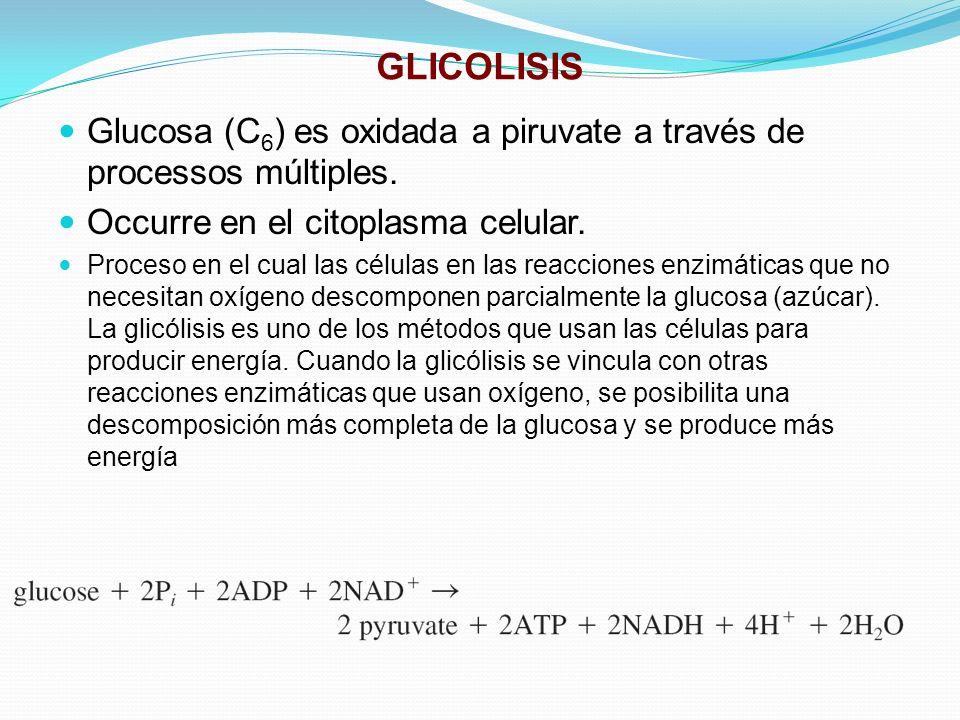 GLICOLISIS Glucosa (C6) es oxidada a piruvate a través de processos múltiples. Occurre en el citoplasma celular.