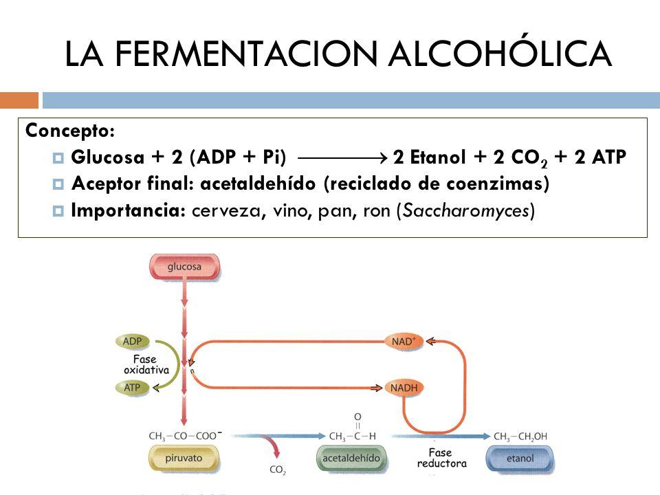 LA FERMENTACION ALCOHÓLICA