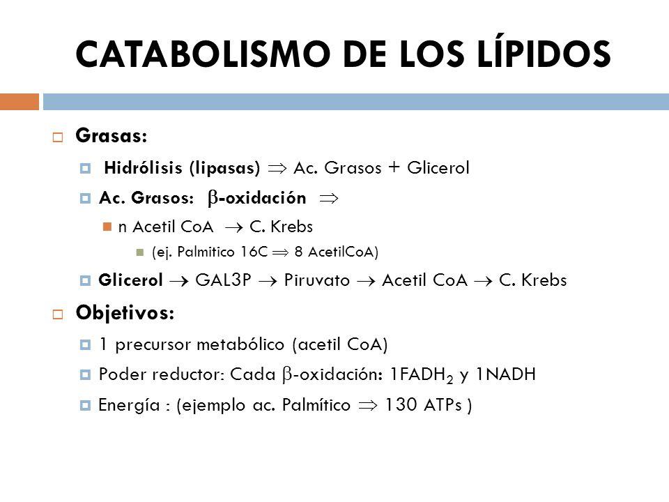 CATABOLISMO DE LOS LÍPIDOS